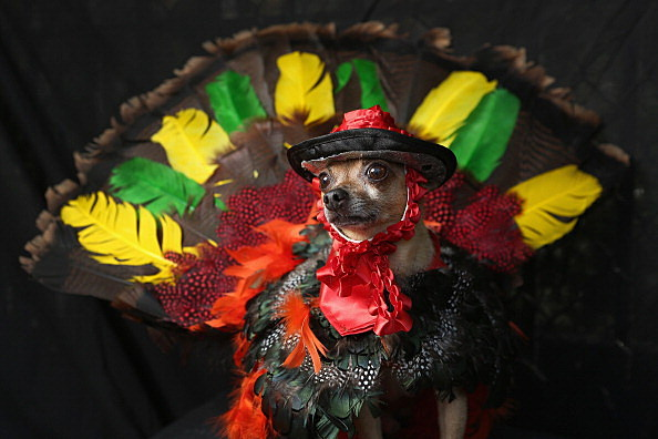 Turkey Dog 2