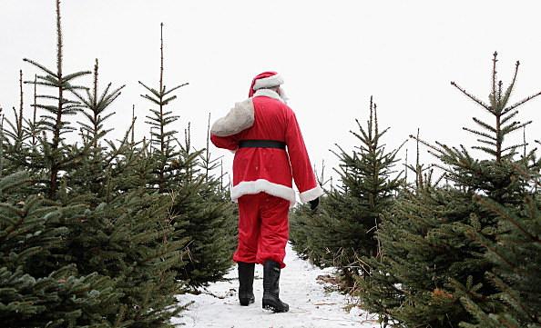 Shop For Christmas Trees