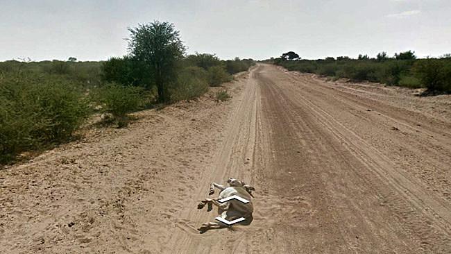 Google Street View Donkey