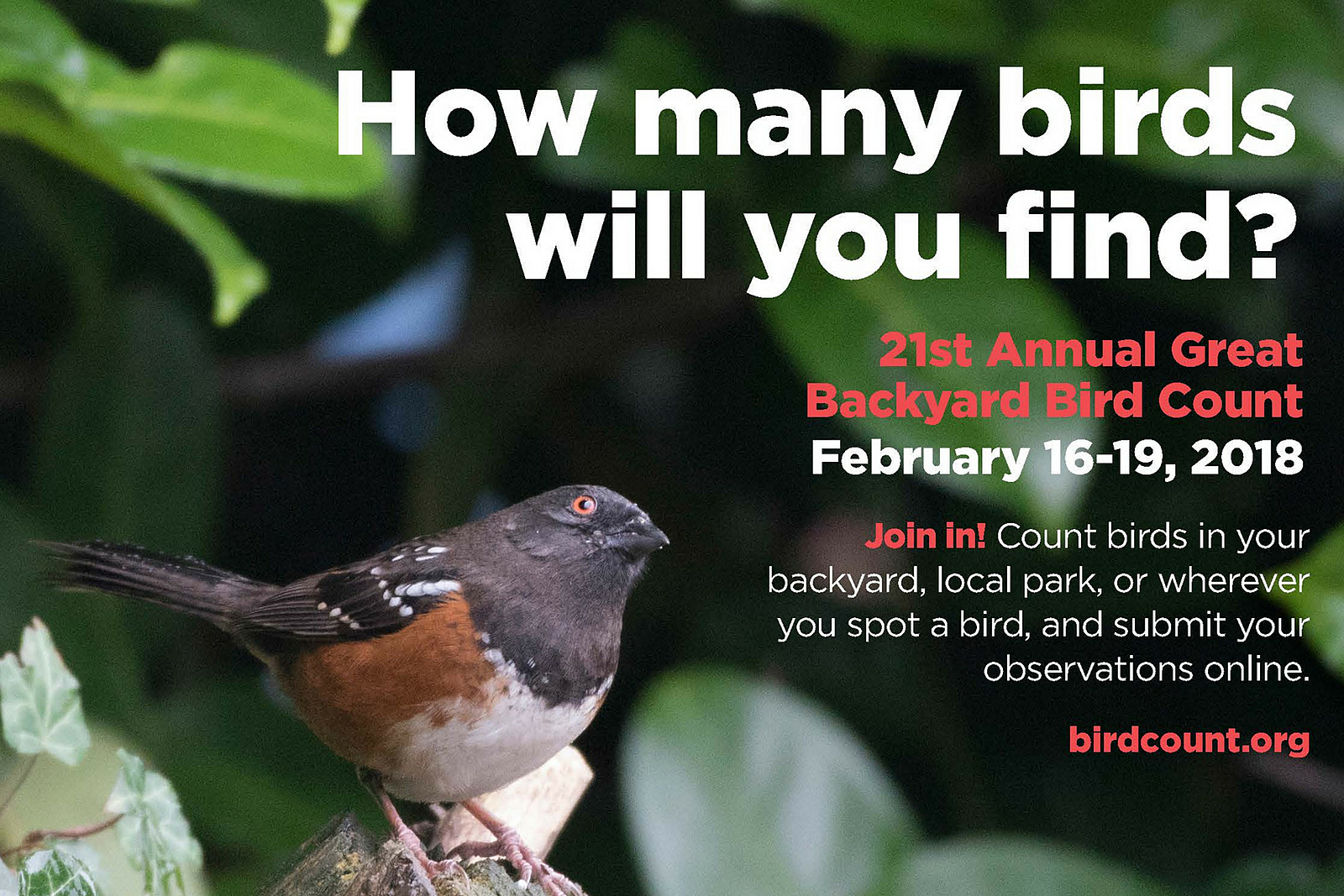 21st Annual Great Backyard Bird Count